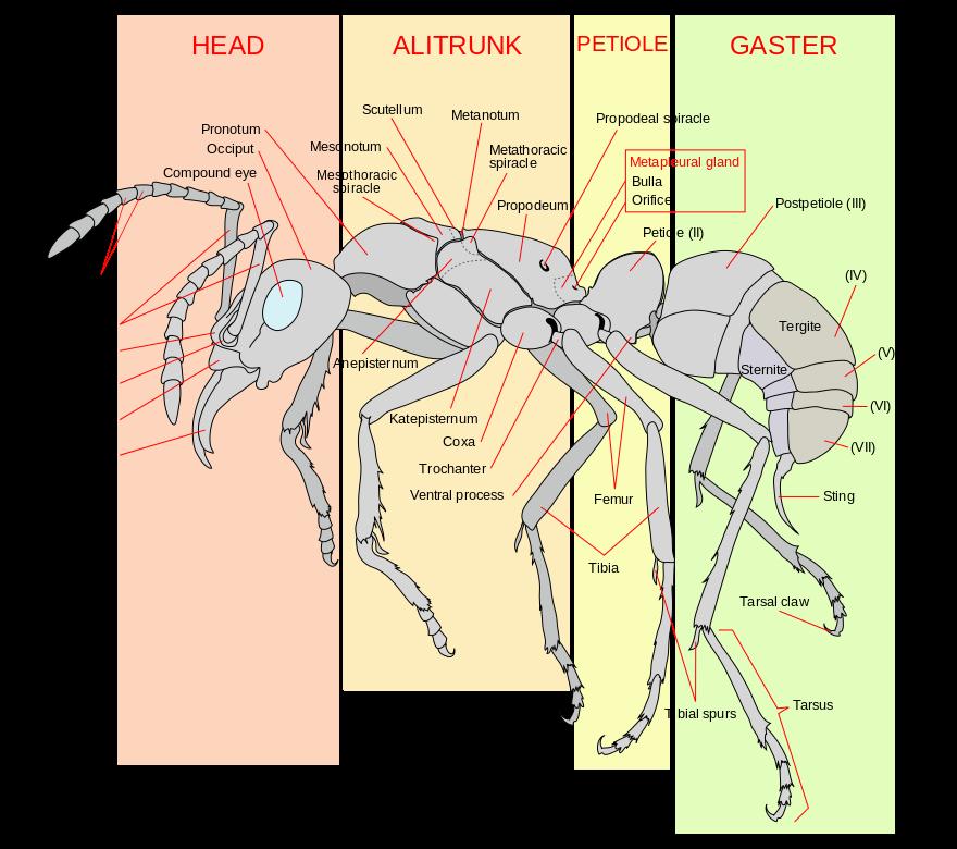 formica - quadro struttura