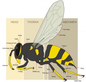 vespa - quadro struttura