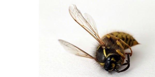 vespa - disinfestazioni Sassari Sardegna