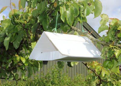 Trapola monitoraggio feromoni insetti in Sardegna