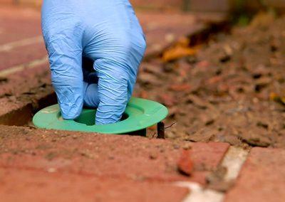 Monitoraggio termiti sottosuolo in Sardegna